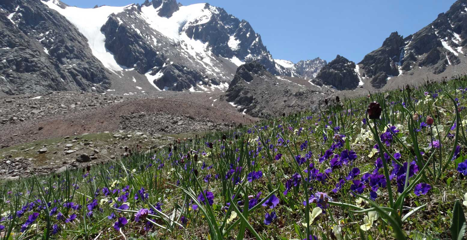 "Best time to enjoy Kazakhstan mountains: blossoming of ""Alpine"" meadows in Ile Alatau"